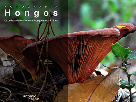 Hongos-eBook-fotografía-Antonio-Painn