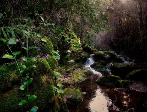 Bosque Profundo 22