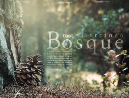 Magazine digital 4b