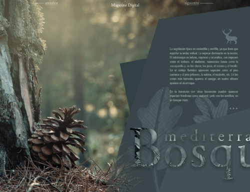 Magazine digital 4a