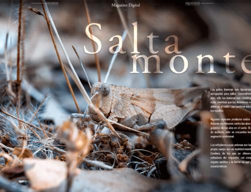 Magazine digital 2b